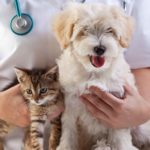 cat-and-dog-with-vet